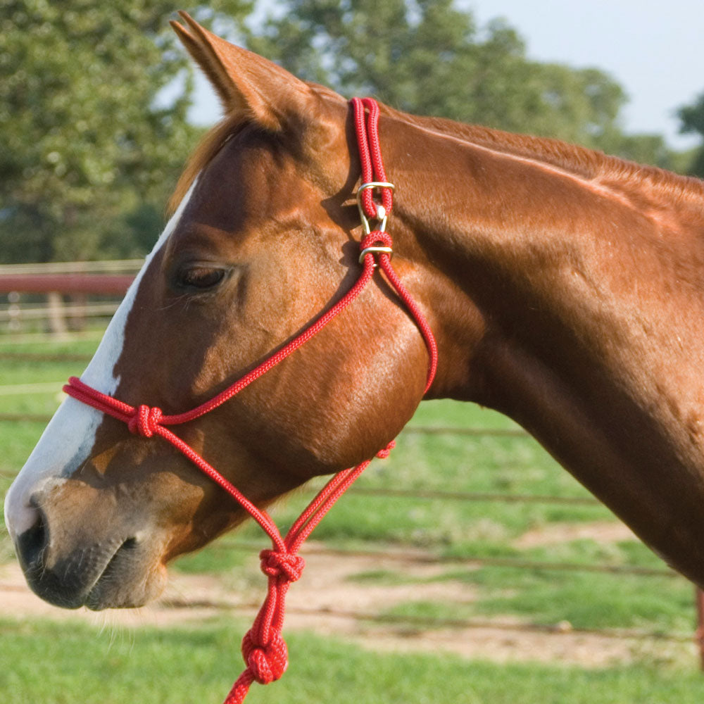 Easy-On Rope Halter Tack - Halters & Leads - Halters Teskey's Teskeys
