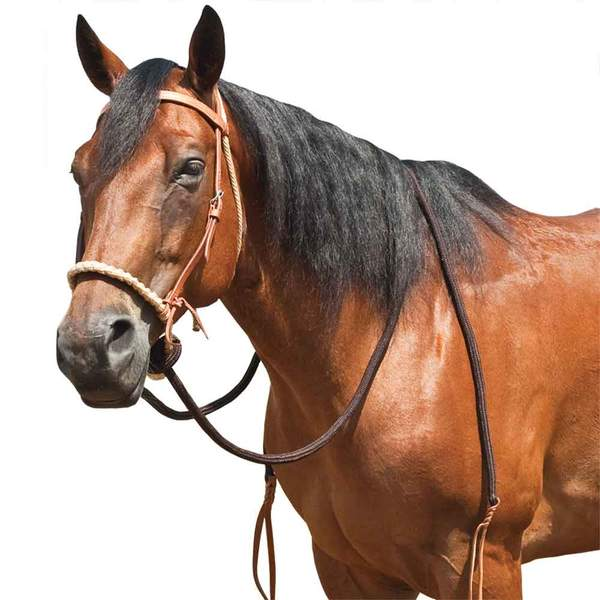 Teskey's Breaking Hackamore Tack - Nosebands & Tie Downs Teskeys Teskeys