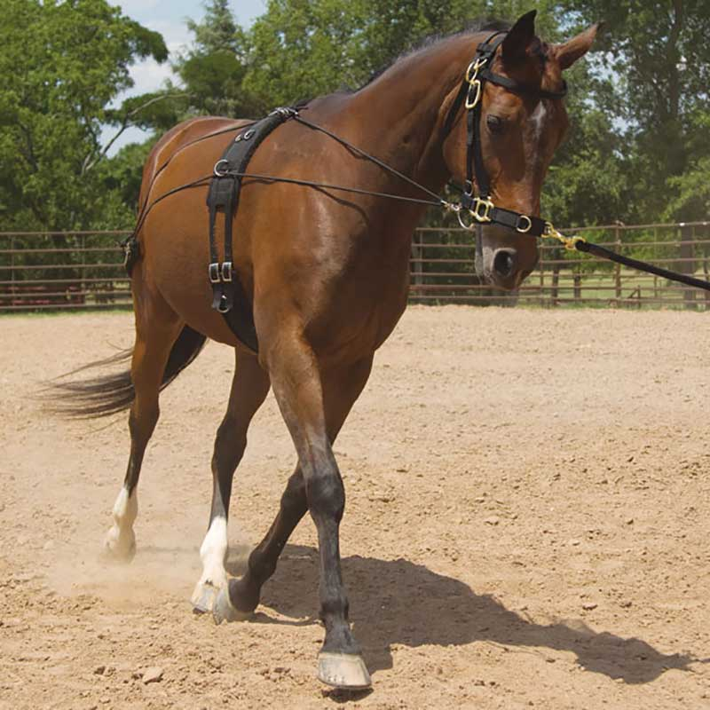 Balance Training System Tack - Training Mustang Teskeys