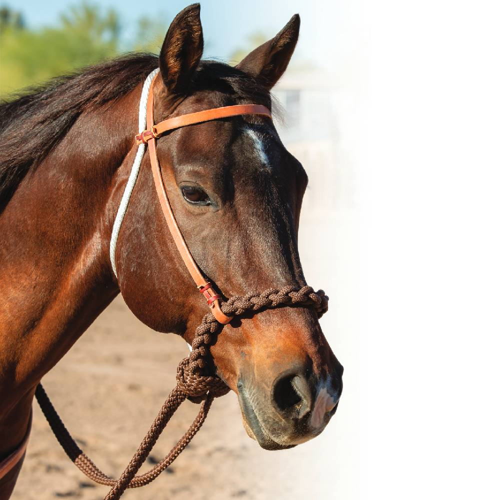Professional's Choice Loping Hackamore Tack - Headstalls - Browband Professional's Choice Teskeys