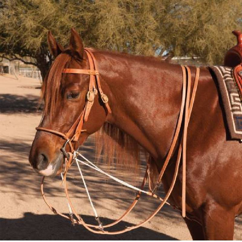 Professional's Choice German Martingale Tack - Training - Headgear Professional's Choice Teskeys