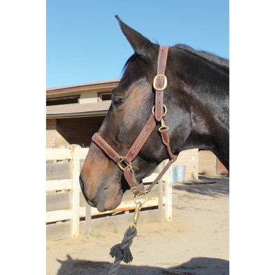 Professional's Choice Leather Halter Tack - Halters & Leads Professional's Choice Teskeys