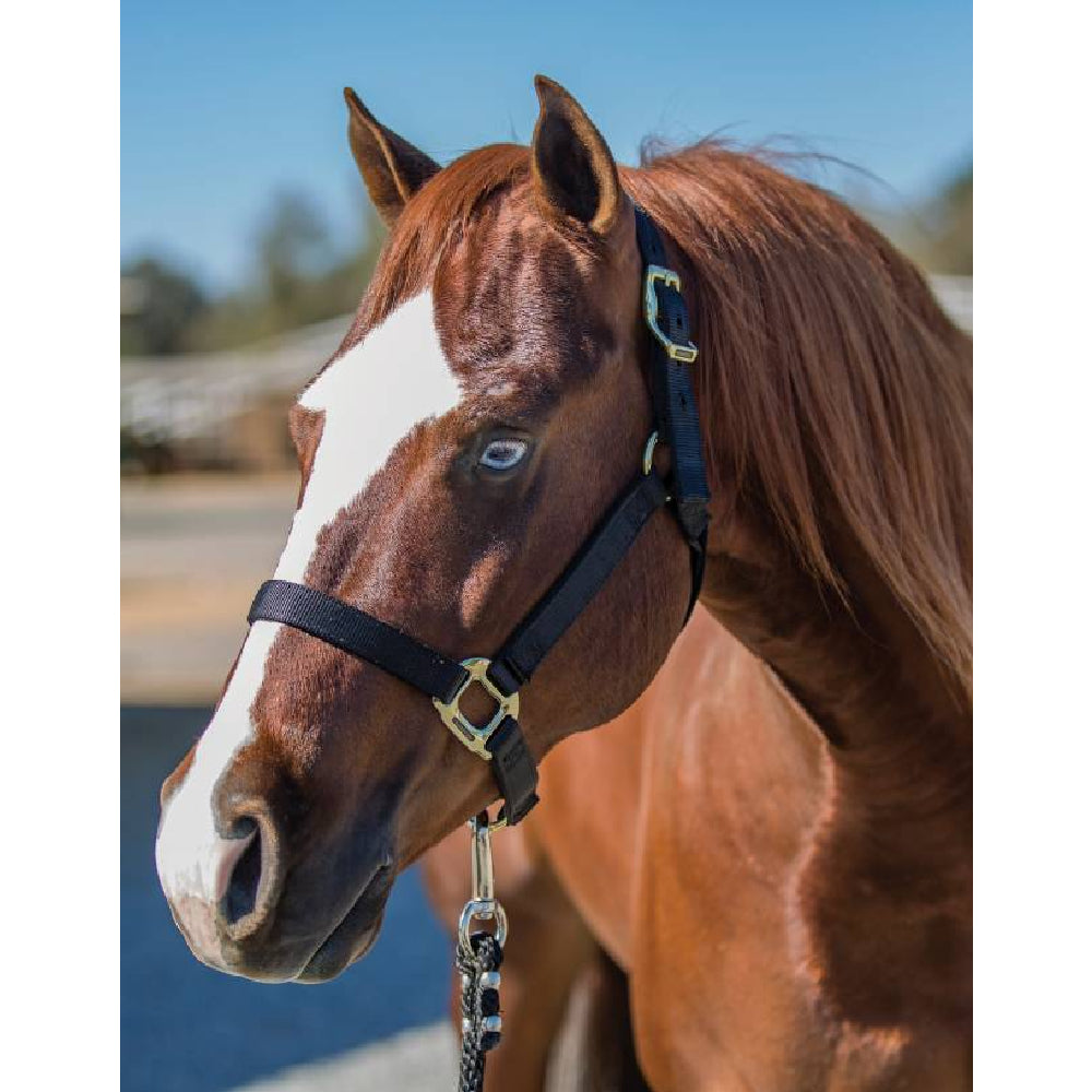 Professional's Choice Nylon Halter Tack - Halters & Leads - Halters Professional's Choice Teskeys