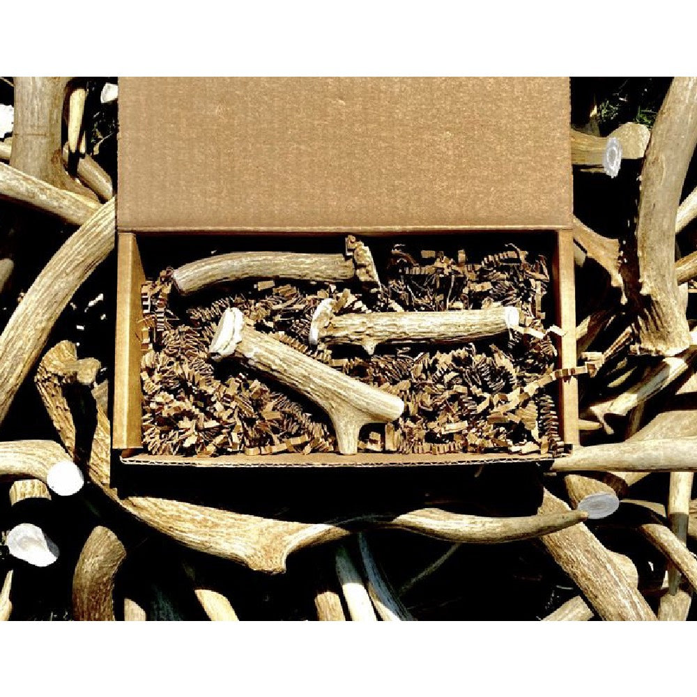 Nadiv Pets Small Antler Box FARM & RANCH - Animal Care - Pets - Toys & Treats Nadiv Pets Teskeys