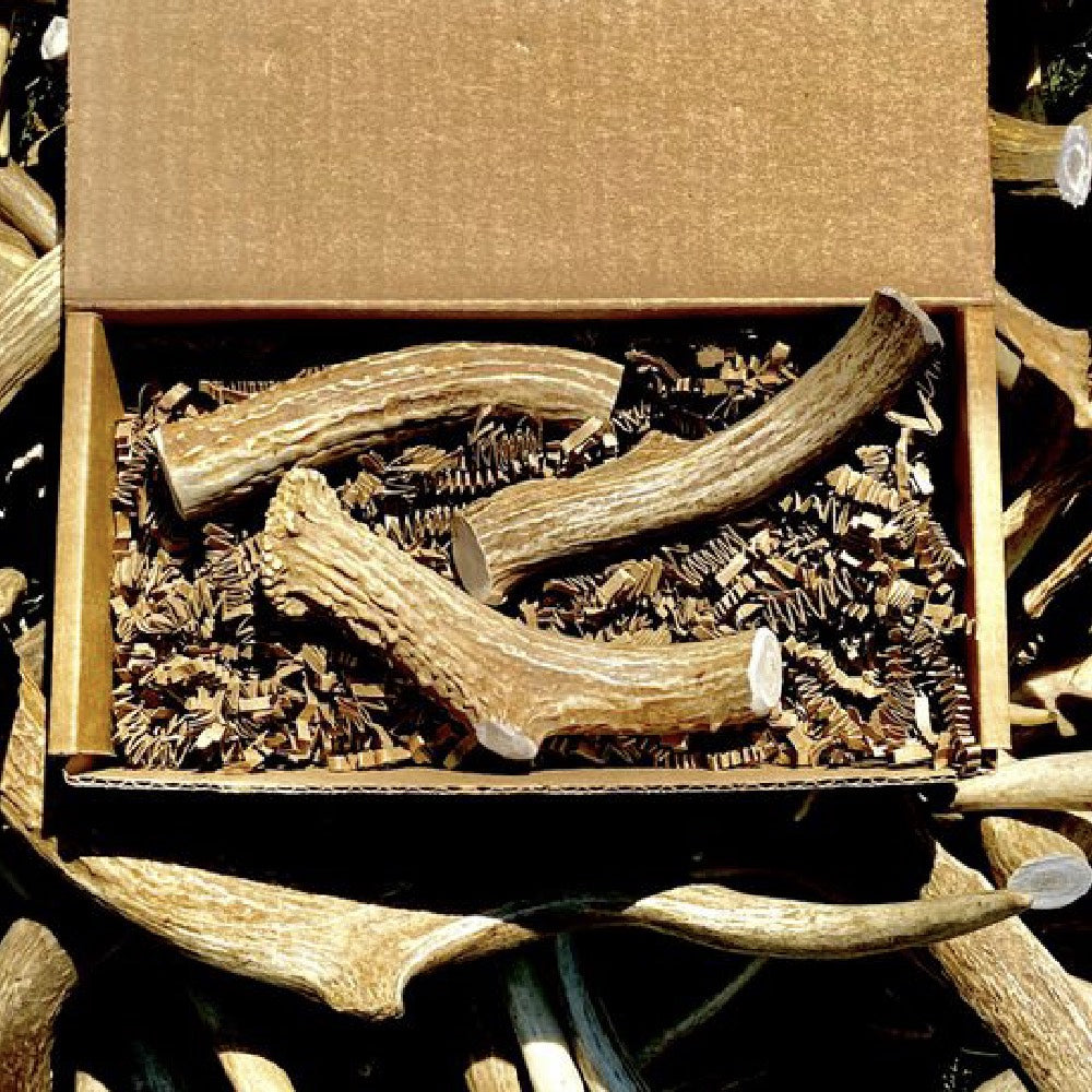 Nadiv Pets Medium Antler Box FARM & RANCH - Animal Care - Pets - Toys & Treats Nadiv Pets Teskeys