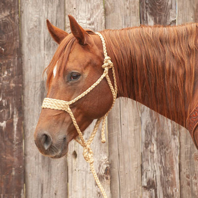 Classic Equine Wide Nose Mule Tape Halter with Lead Tack - Halters & Leads - Halters Classic Equine Teskeys