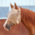 Cashel Econo Fly mask Farm & Ranch - Animal Care - Equine - Fly & Insect Control Cashel Teskeys