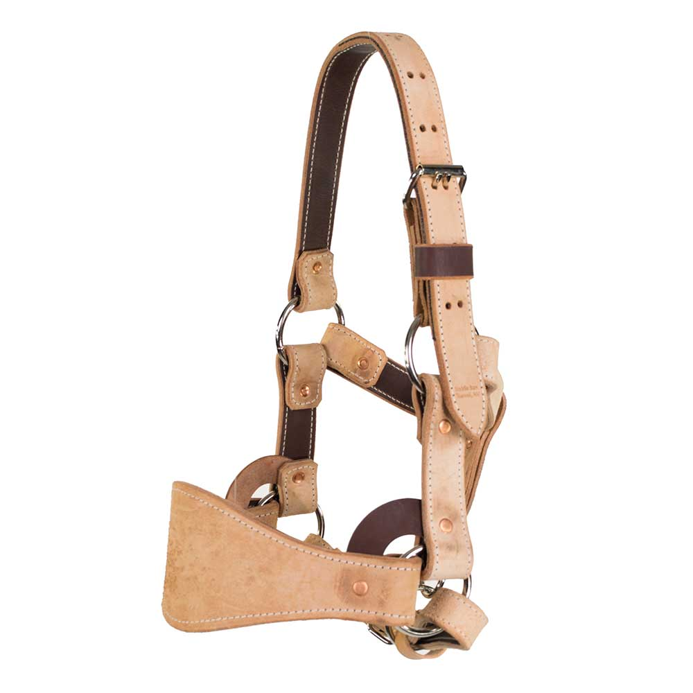 Leather Bronc Halter Tack - Bronc or Bull Riding Teskeys Teskeys