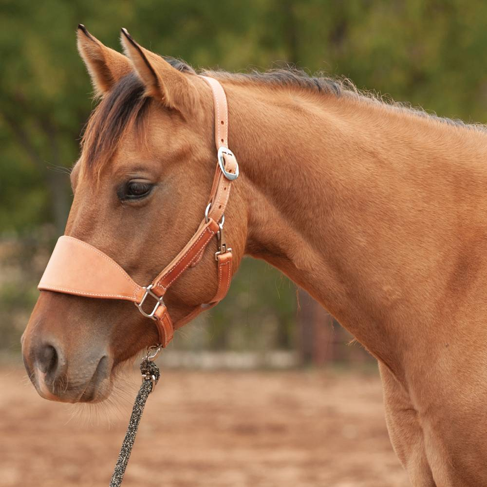 Classic Equine Harness Bronc Halter Tack - Halters & Leads - Halters Classic Equine Teskeys