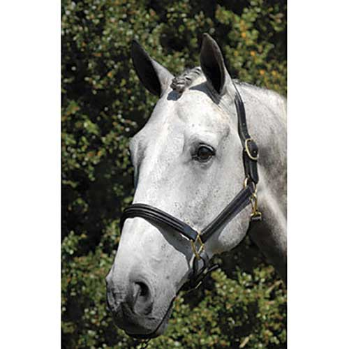 Vespucci Double Raised Halter Tack - English Tack & Equipment Vespucci Teskeys