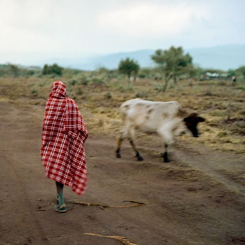Stalawa in East Africa [Heavyweight 12