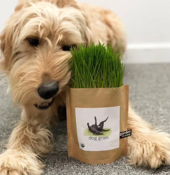 Dog Grass Growing Kit