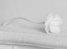 Load image into Gallery viewer, White Peony Faux Flora