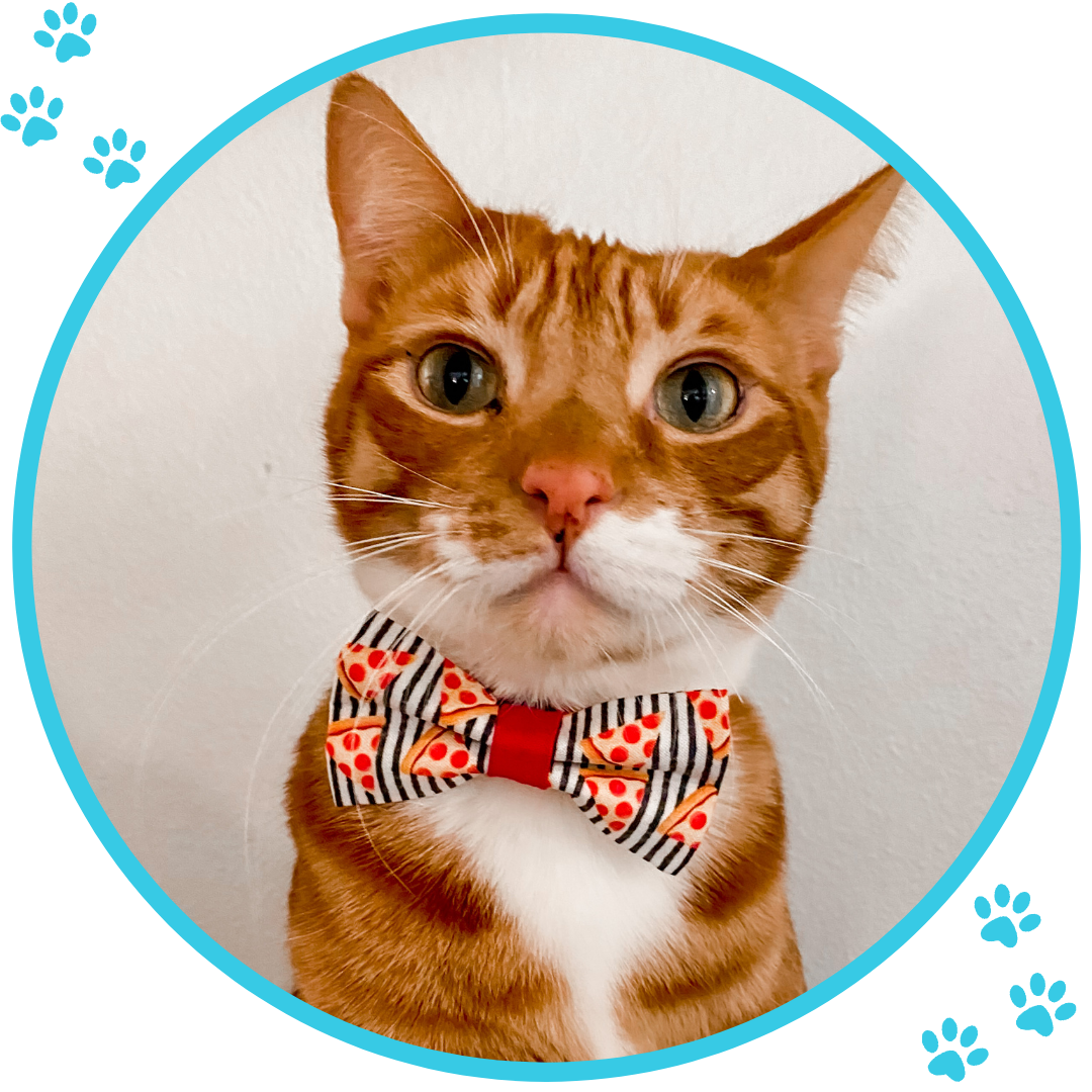 Cute Cat Collars | Cat Bow Ties