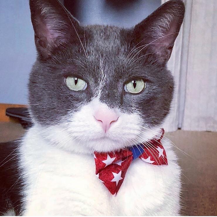 Pet Bow Tie - Victory Red & White Stars