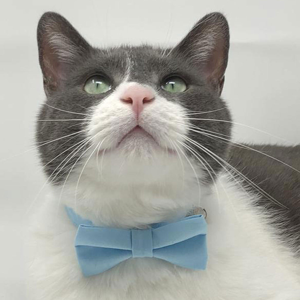 Cat Collar & Bow Tie Set  -  Baby Blue