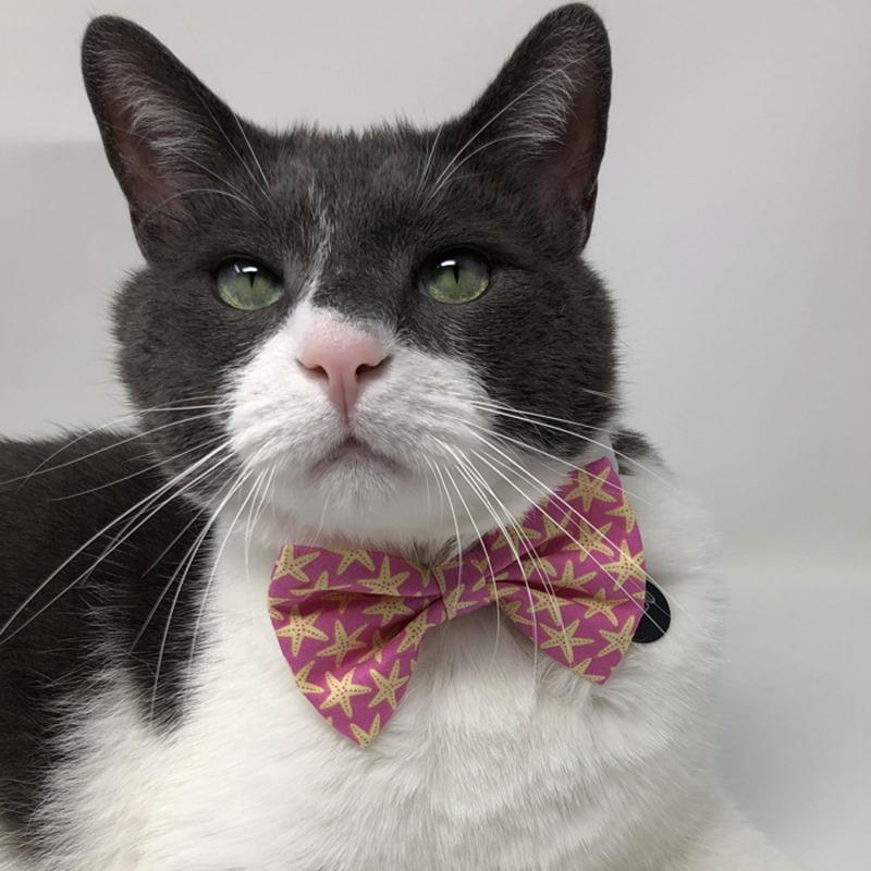 Summer Cat Bow Tie | Cat with Bow Tie