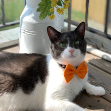 Load image into Gallery viewer, Orange Pet Bow Tie | Halloween Bow Tie for Cats