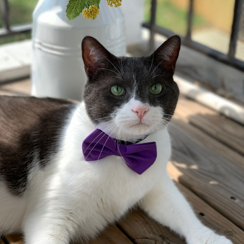 Purple Pet Bow Tie | Bow Ties for Cats