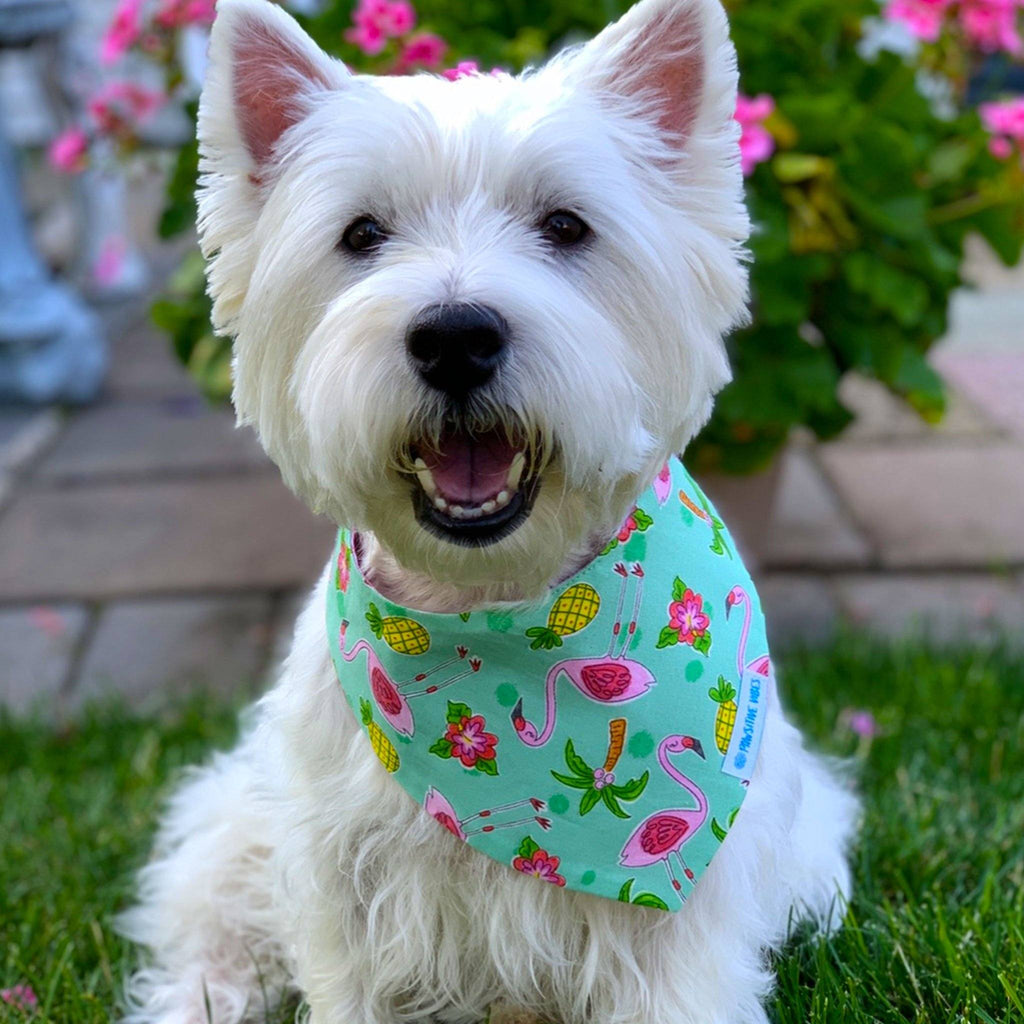 Westie Clothes | Pet Accesories