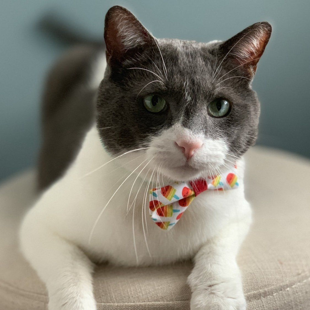 Shop Cat Bow Tie | Summer Cat Bow Tie