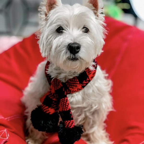 Dog Scarf | Winter Dog Scarf