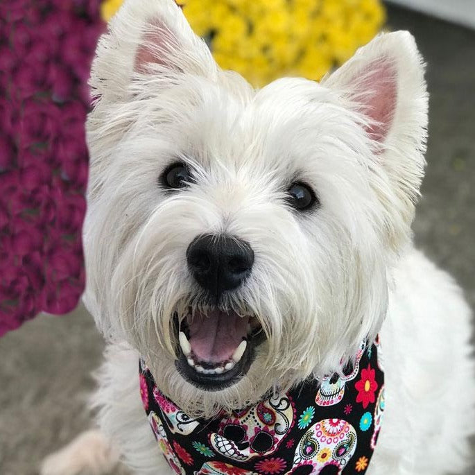 Cotton Reversible Dog Bandana | Cute Halloween Dog Bandana