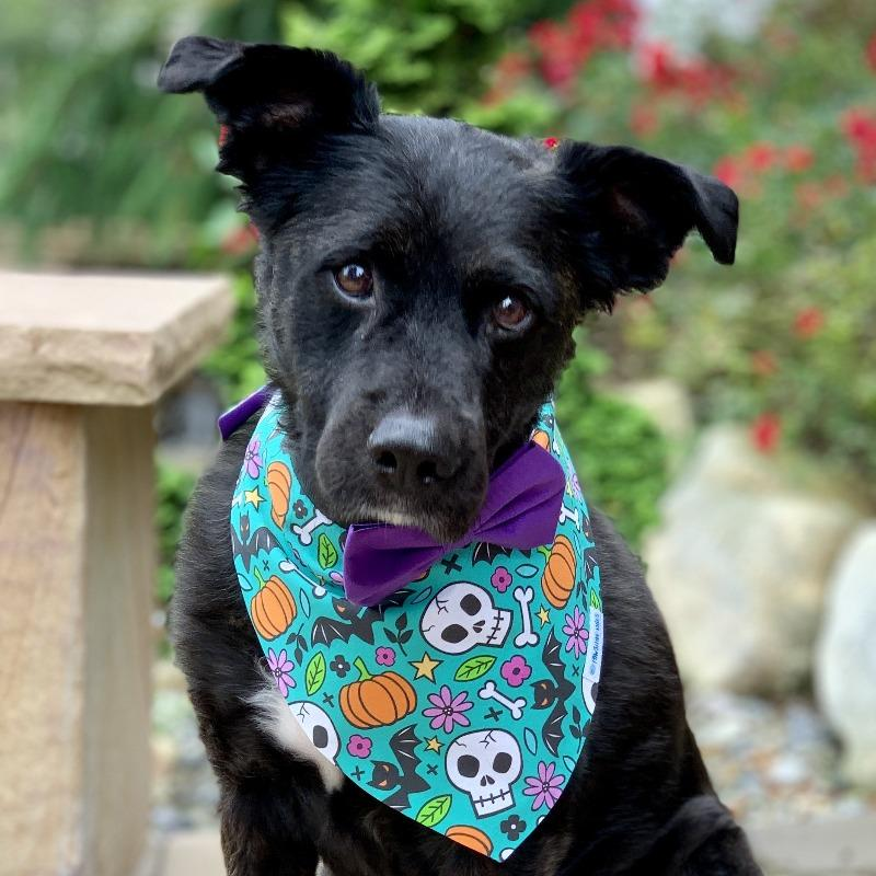 Halloween Dog Bandana | Shop Cute Dog Bandana