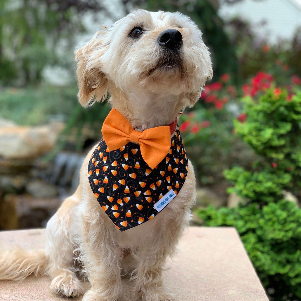 Orange Pet Bow Tie | Halloween Bow Tie for Dogs