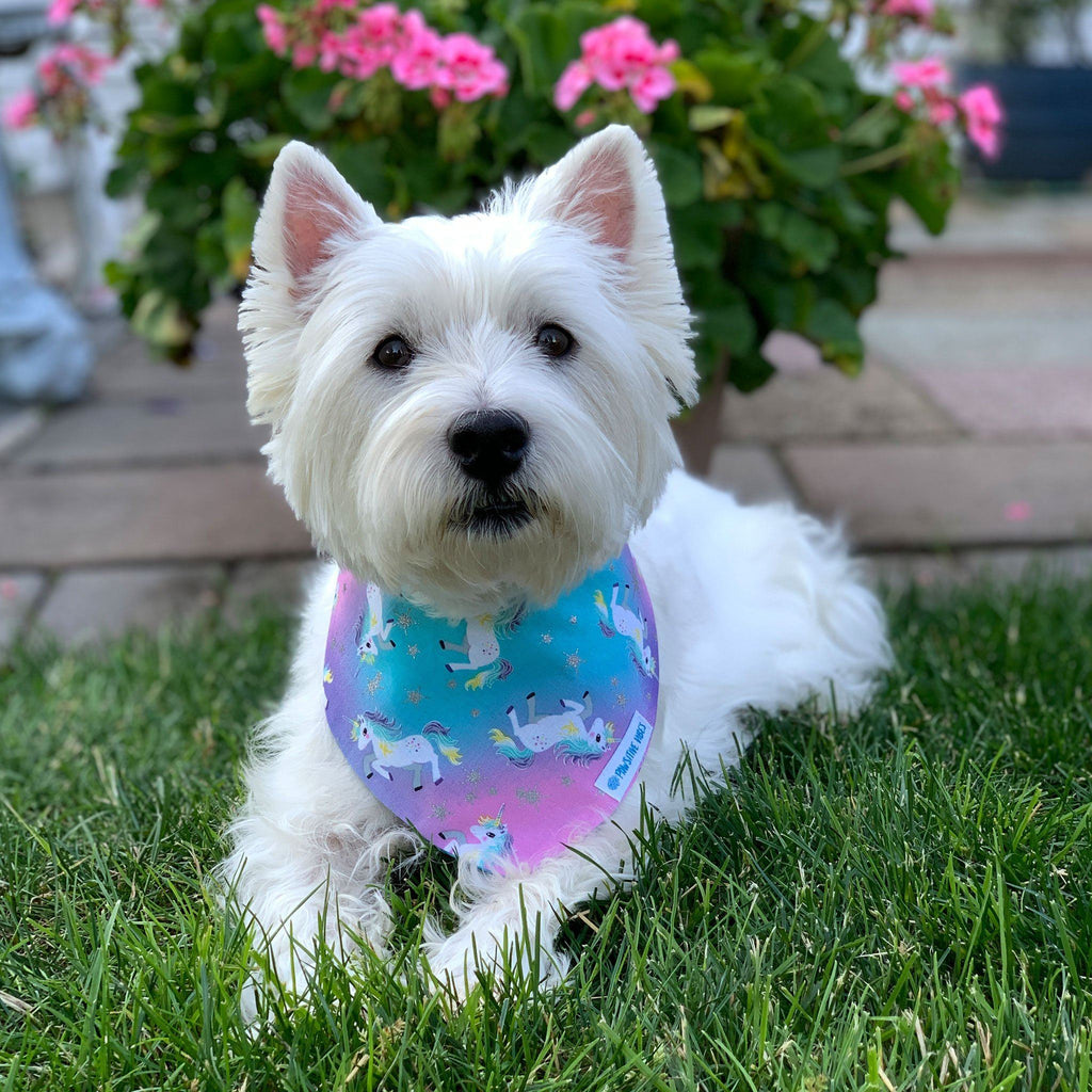Unicorn Dog Bandana | Westie Dog Clothes