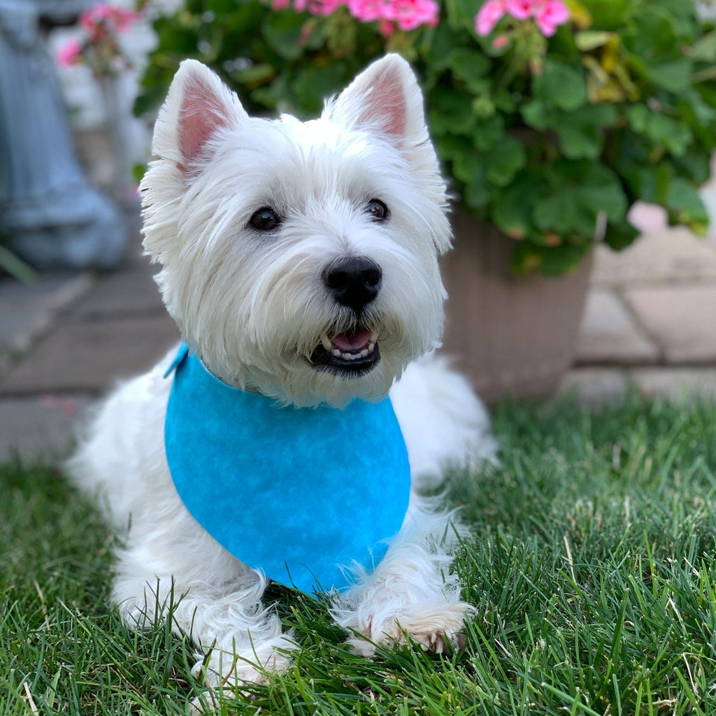 Unicorn Pet Bandana | Westie Dog