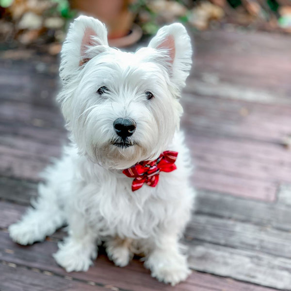 Plaid Dog Collar | Bow Ties for Dogs