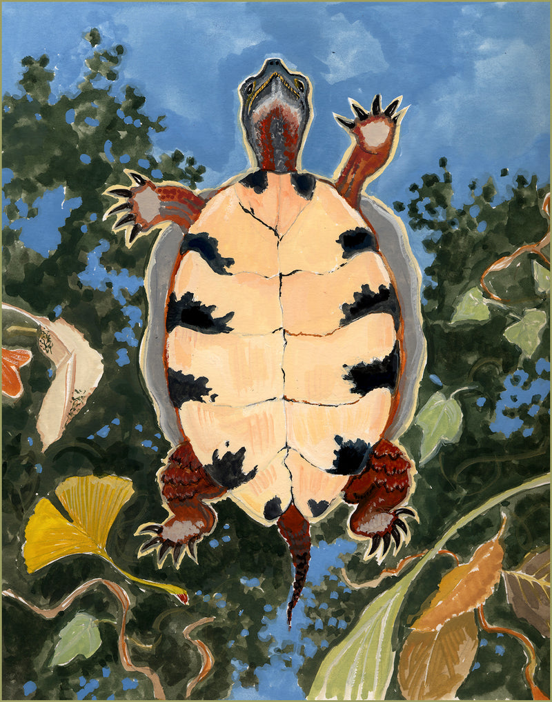 """Frame it"" Greeting Card - Turtle Ridge Gallery"