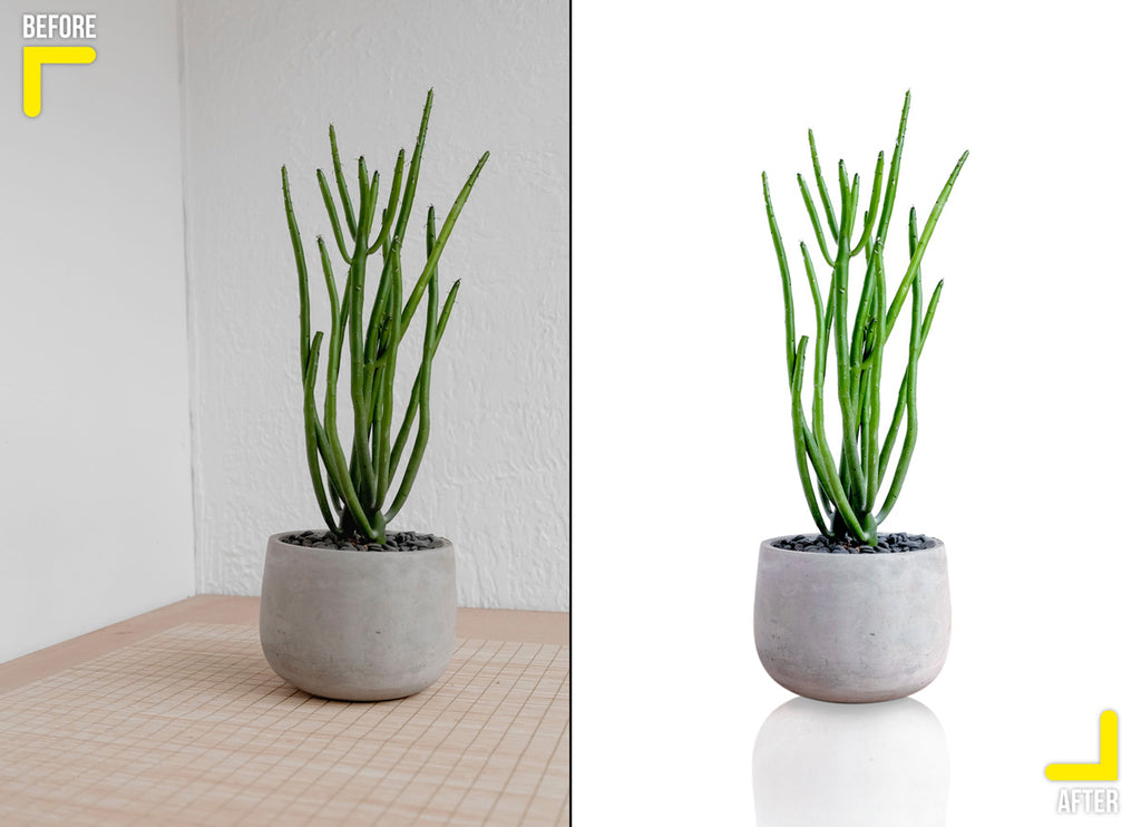 Product retouching, plant clipping path with white background and reflection shadow