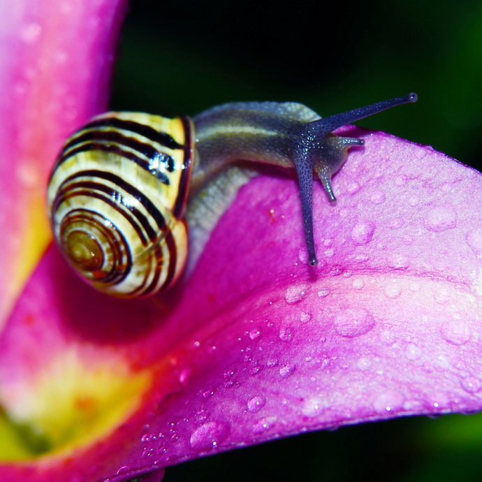 Snail Mucin - Skincare's Secret Weapon