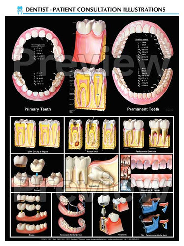 Dental Overview Poster