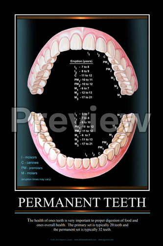 Permanent Teeth Wall Chart