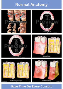 Hygienist-Patient Consultation Illustrations