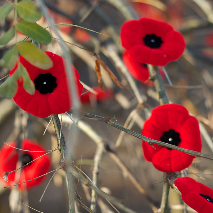 Remembrance Day - store closed