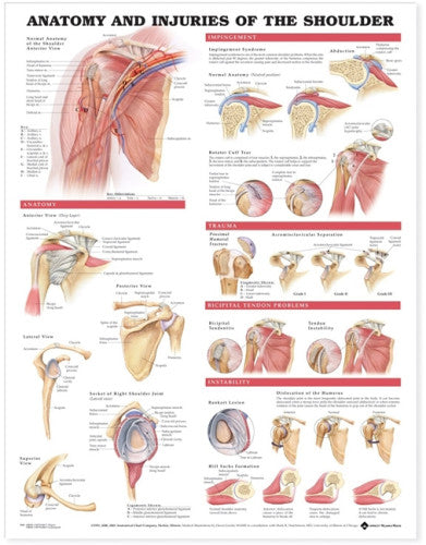 Shoulder Anatomy and Injuries Chart