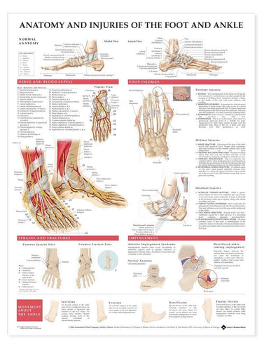 Anatomy & Injuries of Foot and Ankle