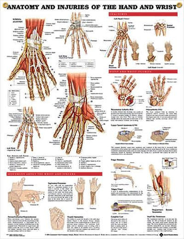 Anatomy & Injuries of the Hand and Wrist