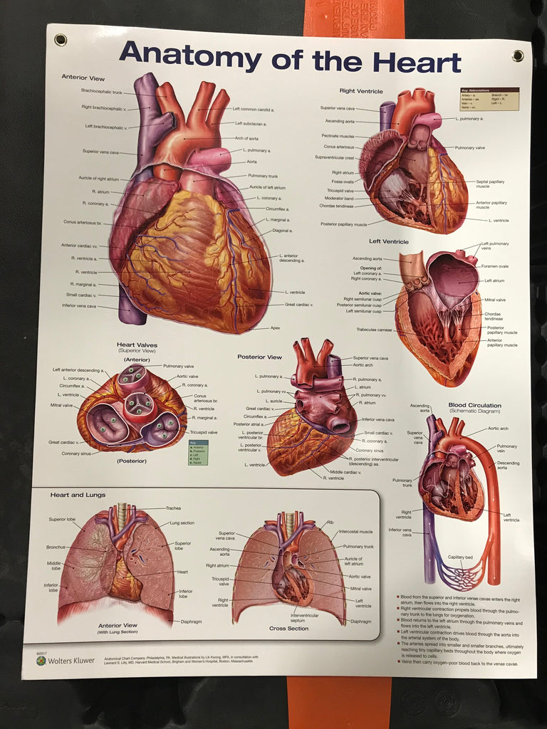 Anatomy of the Heart Chart
