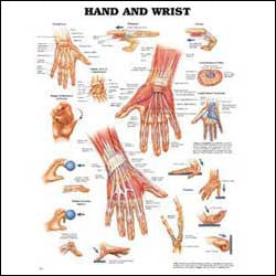 Hand and Wrist Chart, illustrated anatomy