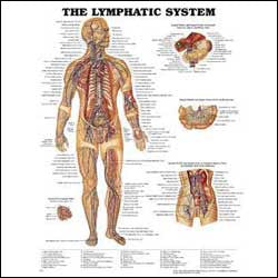 Chart illustrates anatomy of the lymphatic system