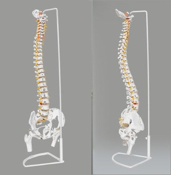 Flexible Spine with Stand