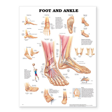 Foot and Ankle Chart