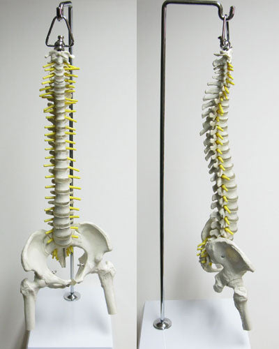 Mini Spine with Stand