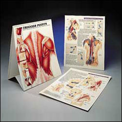 Trigger points shown in flip chart book