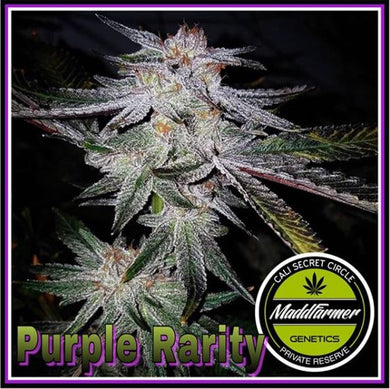 Purple Rarity - Madd Farmer 🚻